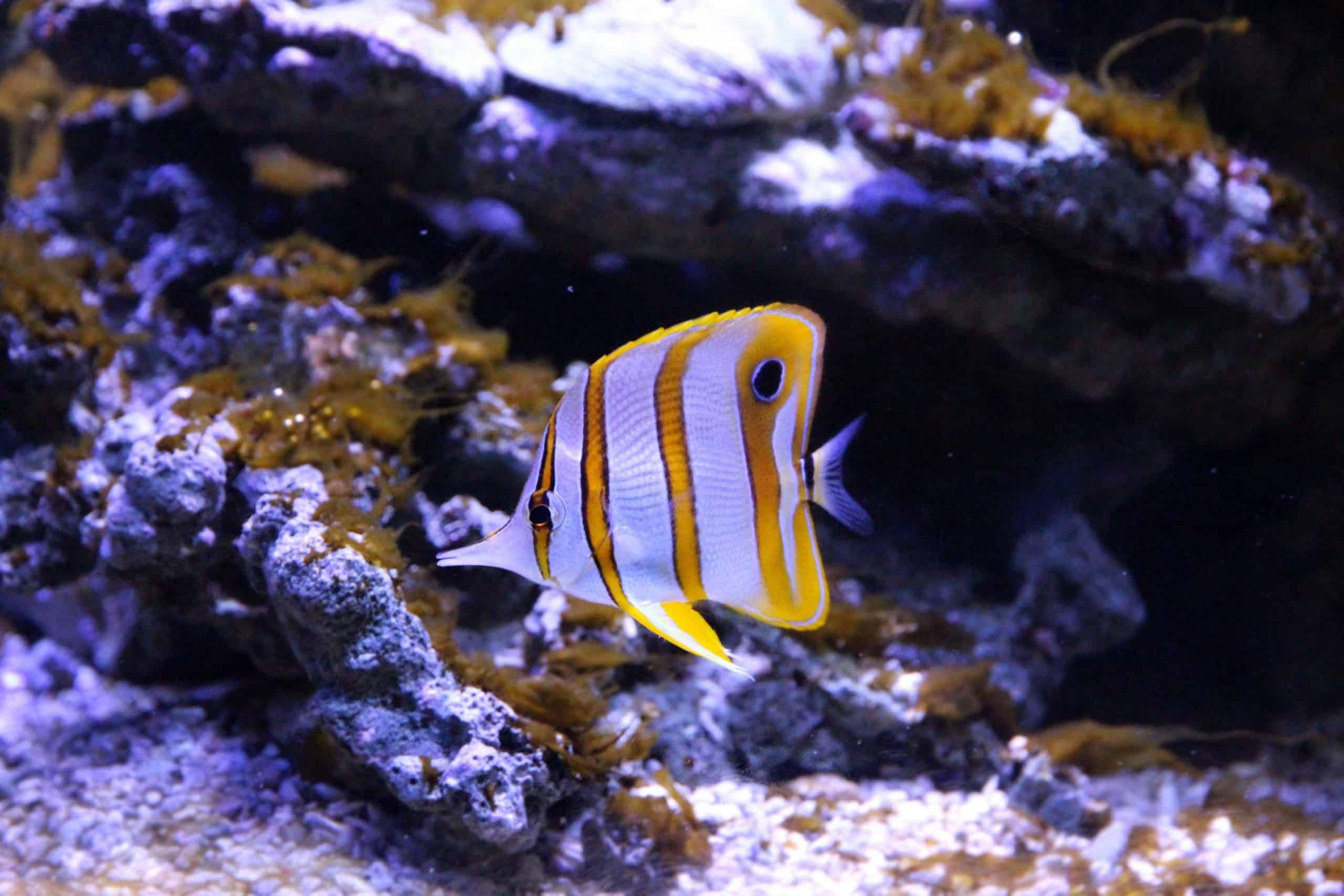 voederautomaat aquarium