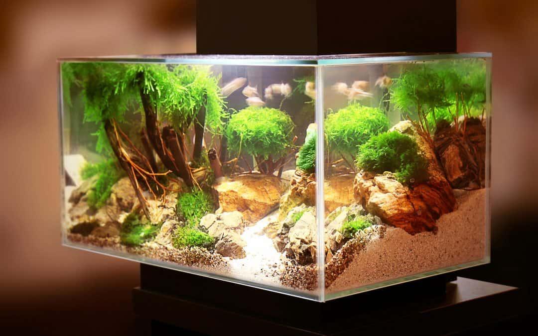 Aquarium decoraties