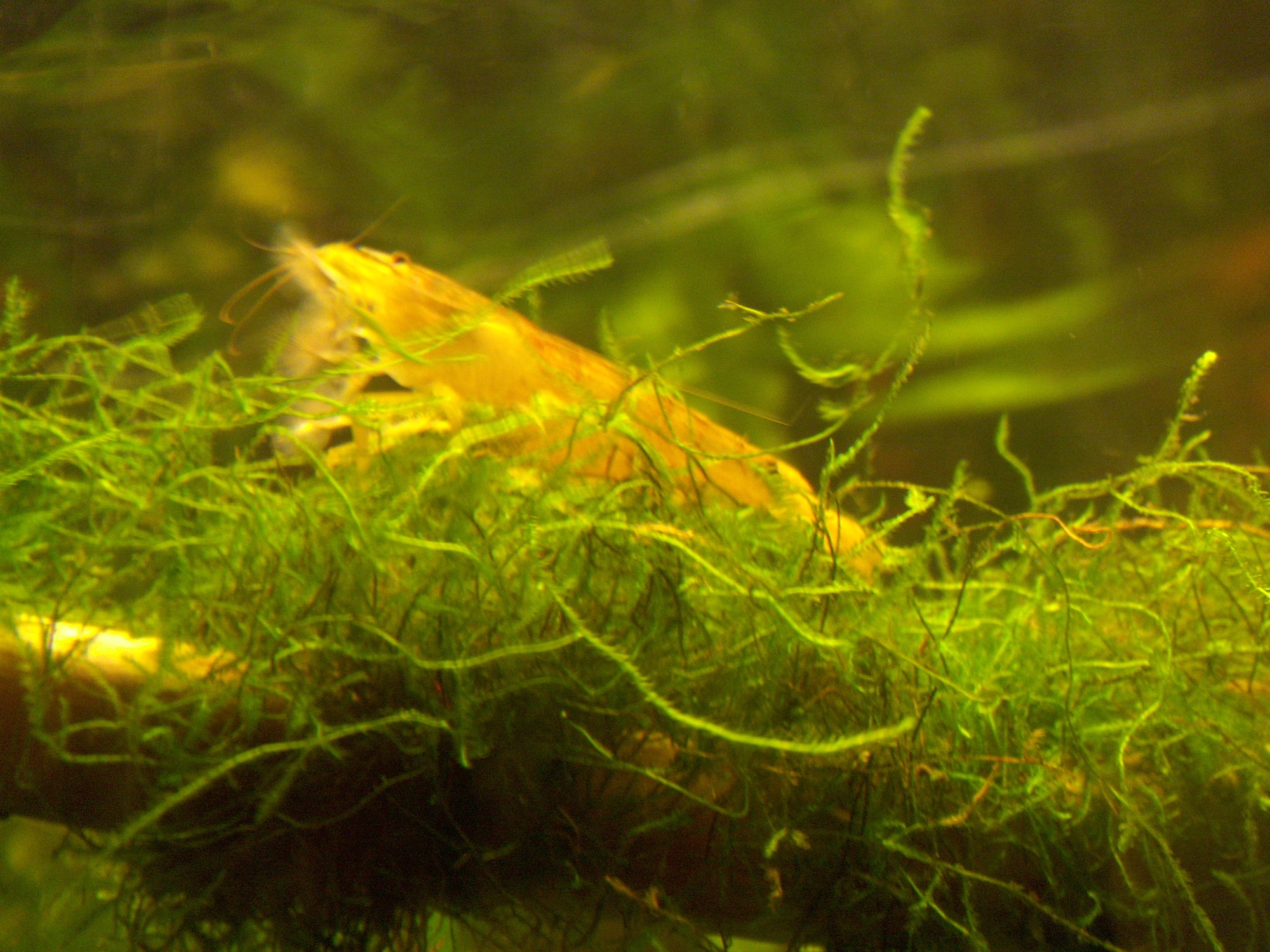 Drijfplantjes aquarium